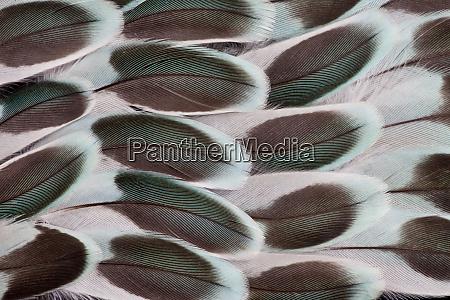 parakeet wing feather design
