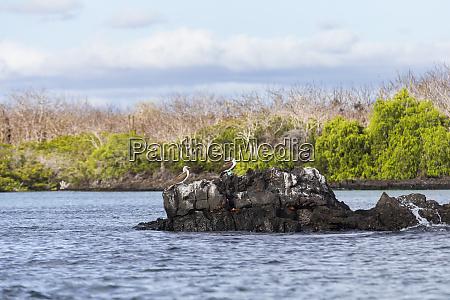 ecuador galapagos island santa cruz isla