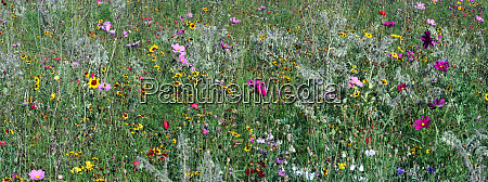 planted wildflower meadow newham london england