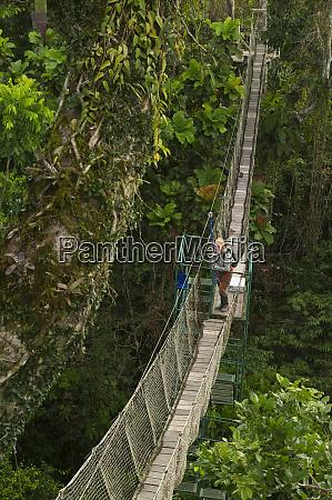 canopy walkway and renee bish tiputini