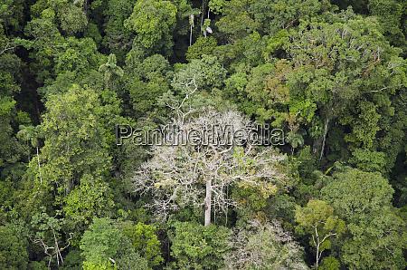 rainforest canopy yasuni national park amazon