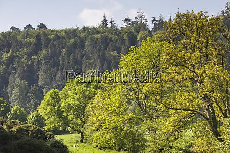 ireland county kilkenny inistioge springtime landscape