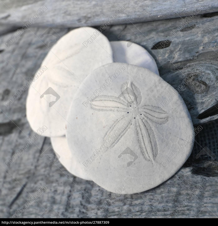 natutical, shell, still, life. - 27887309