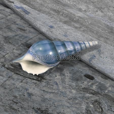 natutical, shell, still, life. - 27887319
