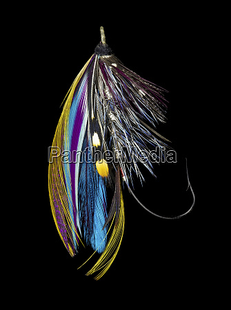 atlantic salmon fly designs jay body