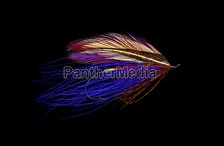 atlantic salmon fly designs iris spey