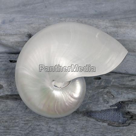 natutical, shell, still, life. - 27888166