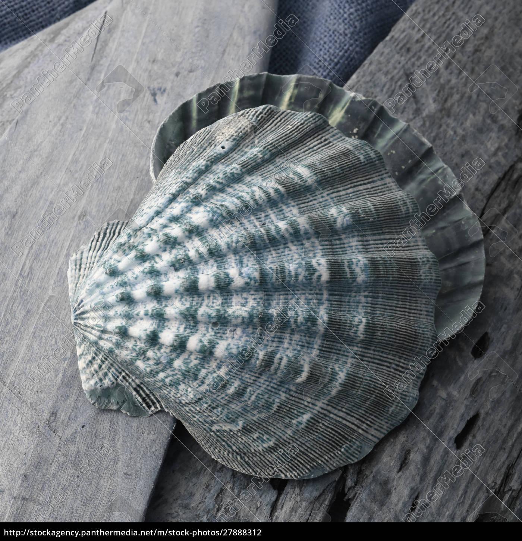 natutical, shell, still, life. - 27888312