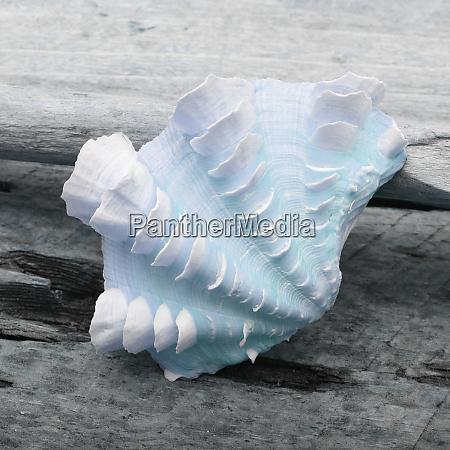 natutical, shell, still, life. - 27888319
