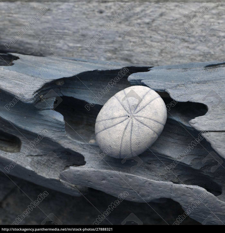 natutical, shell, still, life. - 27888321