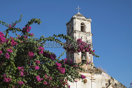 bougainvillea and ruins of a church