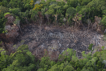 slash and burn amerindian agriculture savanna