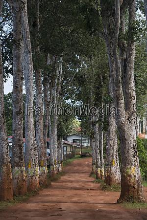 rubber walk mabaruma guyana