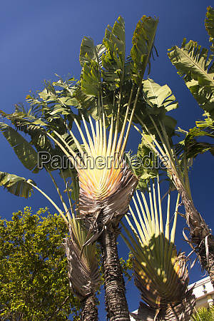 us usvi st thomas travellers palm