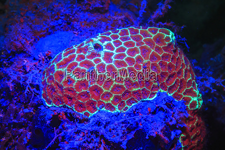 golf ball coral day fluorescing palau