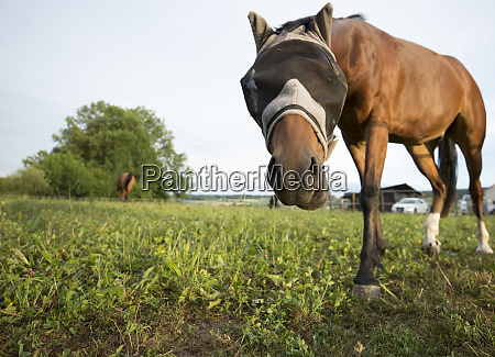 curious horse approaching