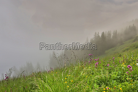 wildflowers on a foggy morning blooming