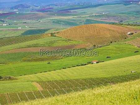 italy sicily trapani alcamo countryside