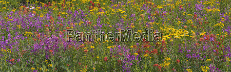 canada british columbia wildflower meadow in