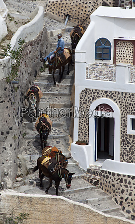 greece santorini donkeys descending the stairs