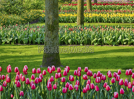 netherlands spring flowering colorful assorted flowers