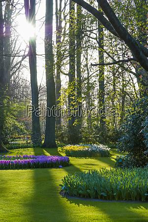 sunlit woodland spring garden