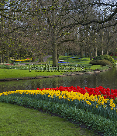 rows of red tulips and yellow