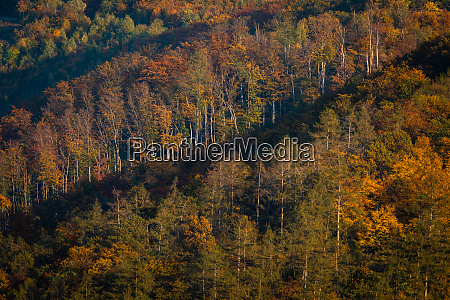 lovely autumnal forests lit by warm
