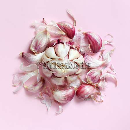 fresh garlic on a light pink