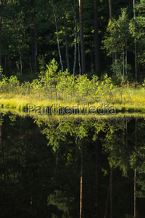 forest reflection in calm water of