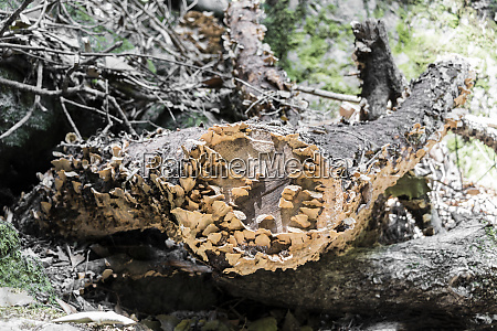 fungal attack on the dead tree