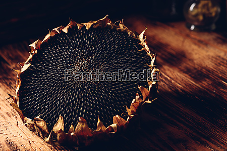 dried sunflower head