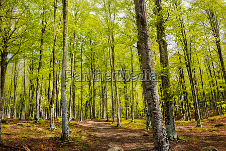 woods in amiata mountain in spring