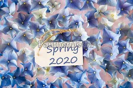hydrangea flat lay text is spring