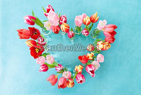 fresh colorful tulips