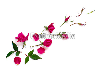 spring composition with pink roses over