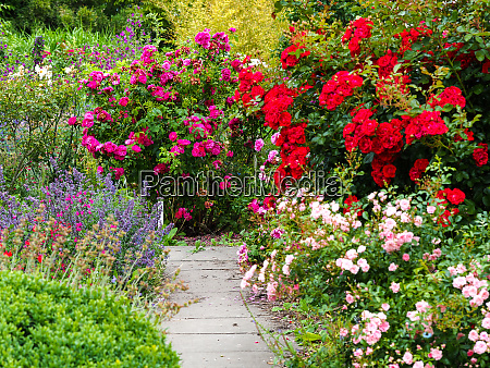 bright flower display in a summer