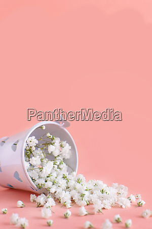 small white flowers in a bucket