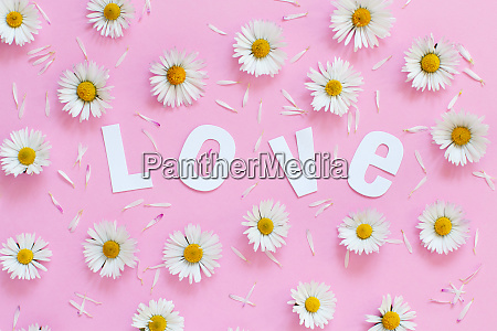 white daisies and text love on