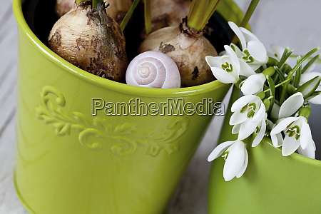 snail shell and spring plants in