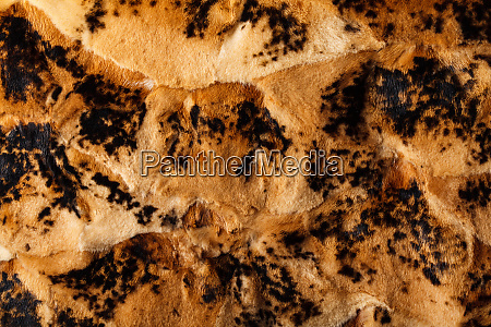 brown and black leopard pattern