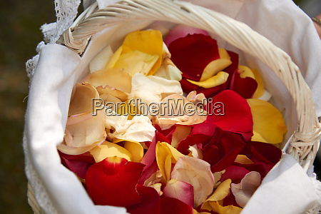rose leafs for wedding ceremony