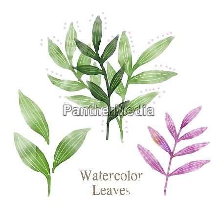 watercolor leaves illustration
