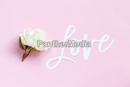 cream rose and text love on