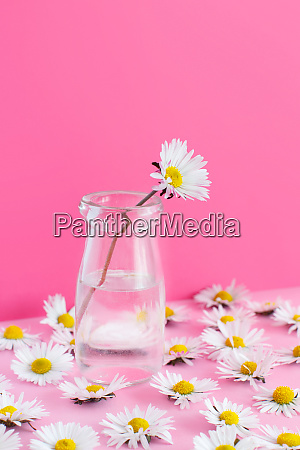 spring composition with daisies on a
