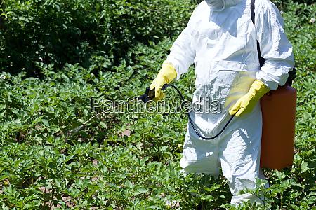 pesticide spraying non organic vegetables