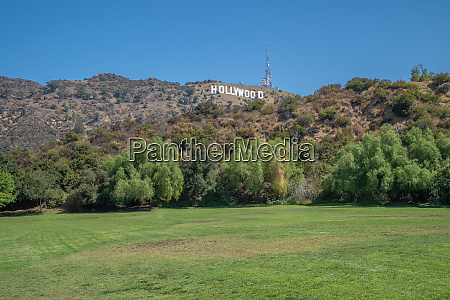 green meadow in front of a