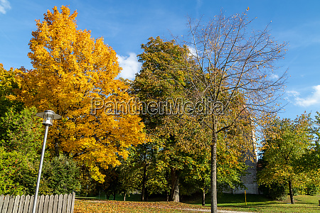 autumn landscape with multicolored trees in