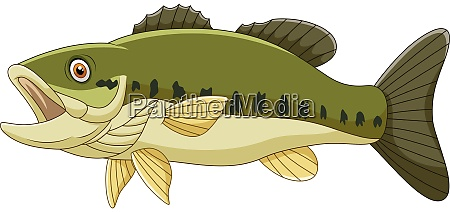 cartoon bass fish isolated on white