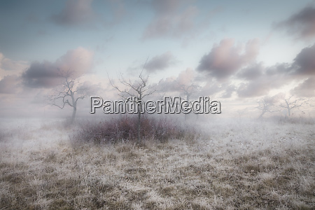 rimy meadow orchard